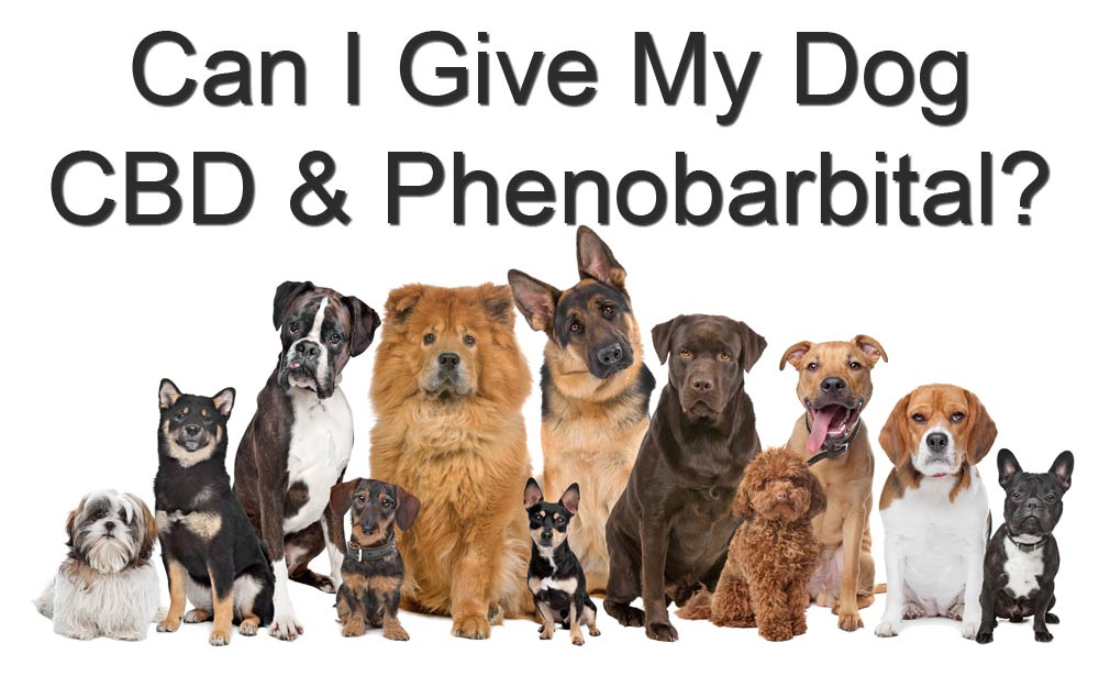 Can-I-Give-My-Dog-CBD-Oil-And-Phenobarbital