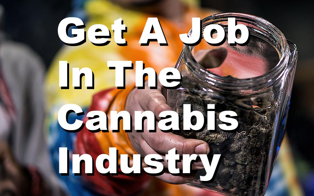How To Get A Job In The Cannabis Industry – A Detailed Guide