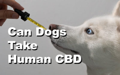 Is Human Grade CBD Safe For Dogs: Your Questions Answered