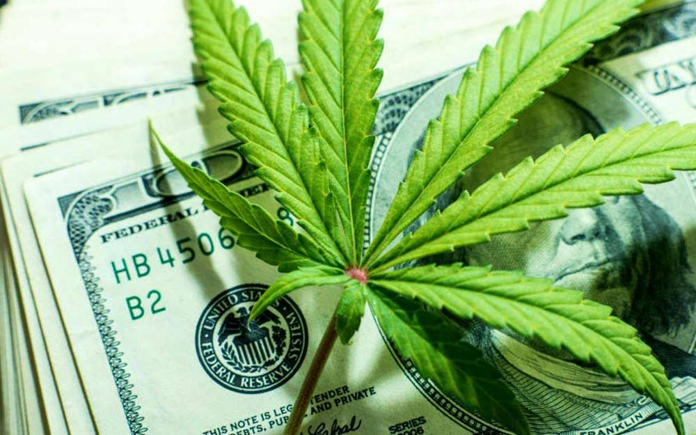 Why Investing In Cannabis Is Beneficial? 4 Reasons To Start Cannabusiness